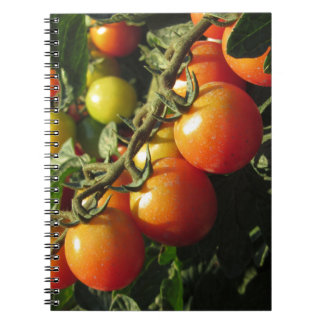 Tomato plants growing in the garden . Tuscany Notebook