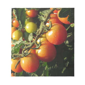 Tomato plants growing in the garden . Tuscany Notepad