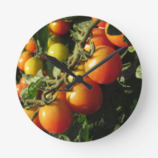 Tomato plants growing in the garden . Tuscany Round Clock