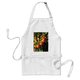 Tomato plants growing in the garden . Tuscany Standard Apron