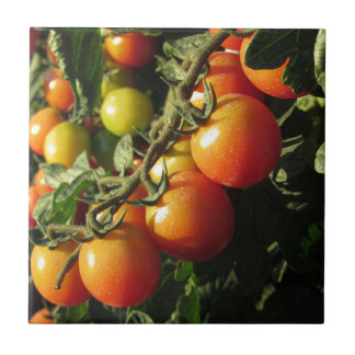 Tomato plants growing in the garden . Tuscany Tile