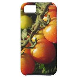 Tomato plants growing in the garden . Tuscany Tough iPhone 5 Case
