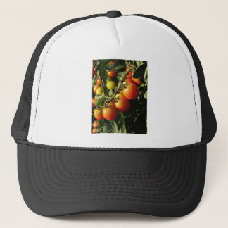 Tomato plants growing in the garden . Tuscany Trucker Hat
