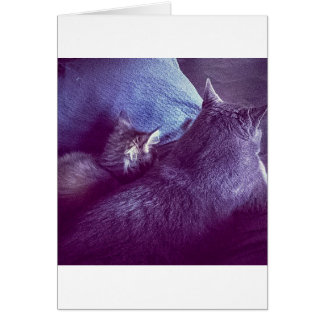 TOMs cat seal and Card