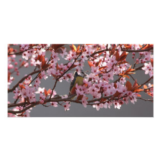 tomtit sitting in blooming cherry plum tree photo card template