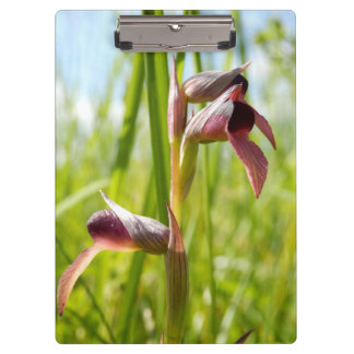 Tongue Orchid Clipboard