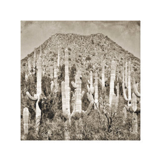 Tonto Saguaro Canvas
