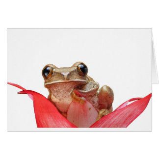 Too Cool Daisy Frog Card