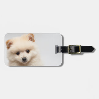 Too Cute Pomeranian Luggage Tag