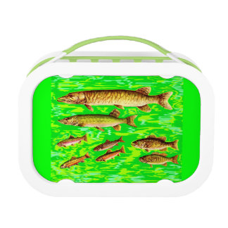 too many fish in the sea lunch boxes
