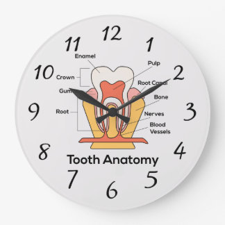 Tooth Anatomy Chart Large Clock