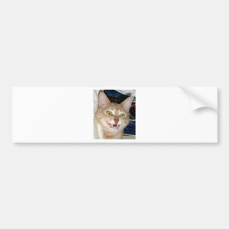 TOOTHY CAT BUMPER STICKER
