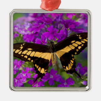 Top of a swallowtail butterfly metal ornament