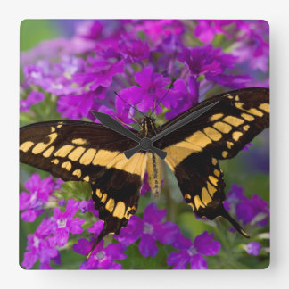 Top of a swallowtail butterfly square wall clock