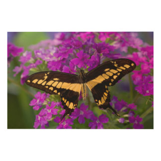 Top of a swallowtail butterfly wood prints
