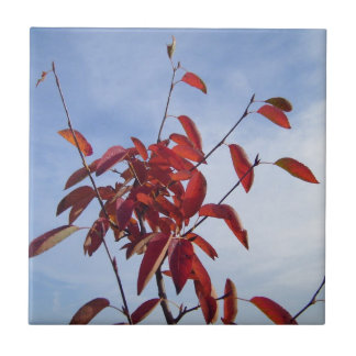 TOP OF AUTUMN TREE SMALL SQUARE TILE