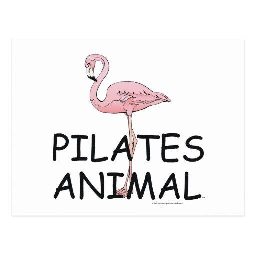 TOP Pilates Animal Postcard