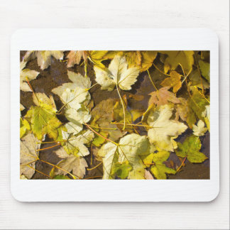 Top view of a wet autumn leaves mouse pad