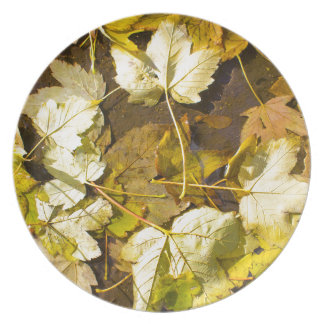 Top view of a wet autumn leaves plate