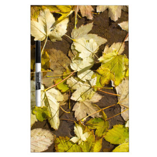 Top view of a wet autumn maple leaves dry erase board