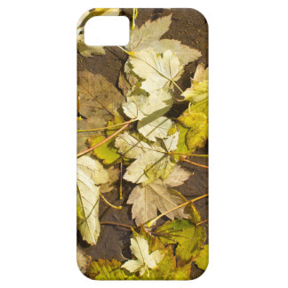 Top view of a wet autumn maple leaves iPhone 5 covers