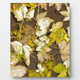 Top view of a wet autumn maple leaves plaque
