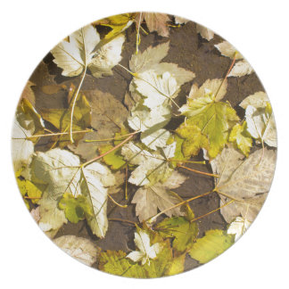 Top view of a wet autumn maple leaves plate