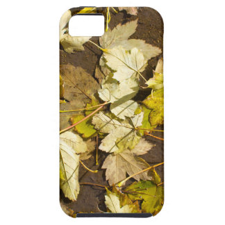 Top view of a wet autumn maple leaves tough iPhone 5 case