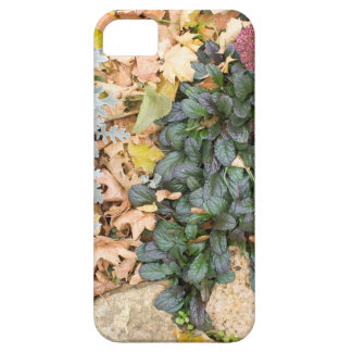 Top view of the autumn flowerbed iPhone 5 covers