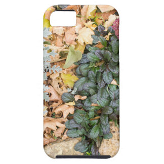 Top view of the autumn flowerbed tough iPhone 5 case