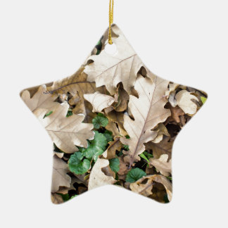 Top view of the fallen oak leaves ceramic star decoration