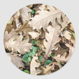 Top view of the fallen oak leaves classic round sticker