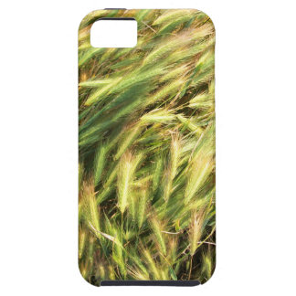 Top view on the dry grass of the lawn tough iPhone 5 case