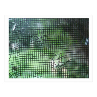 Torn Window Screen Postcard