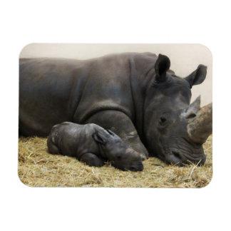 Toronto Zoo baby white rhino Magnet