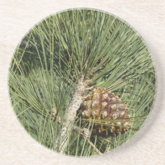 Torrey Pine Closeup California Tree Coaster