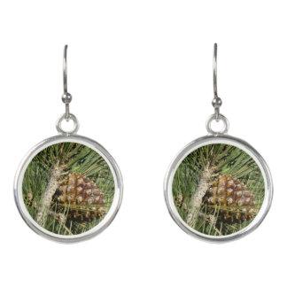 Torrey Pine Closeup California Tree Earrings