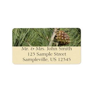 Torrey Pine Closeup California Tree Label