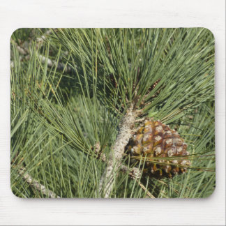 Torrey Pine Closeup California Tree Mouse Pad