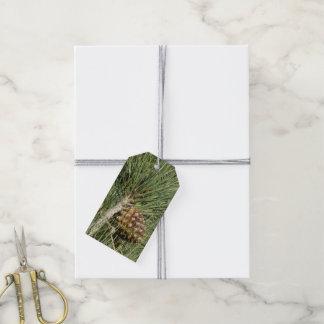 Torrey Pine Closeup Gift Tags