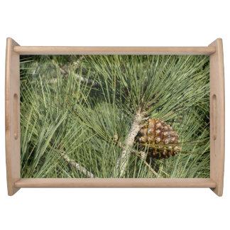 Torrey Pine Closeup Serving Tray