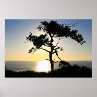 Torrey Pine Silhouette Matte Canvas Poster