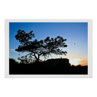 Torrey Pine Silhouette Posters