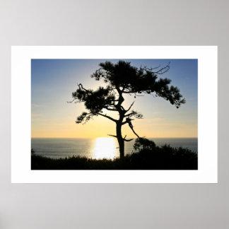 Torrey Pine Silhouette Poster