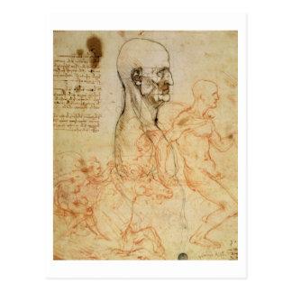 Torso of a Man in Profile, the Head Squared for Pr Postcard