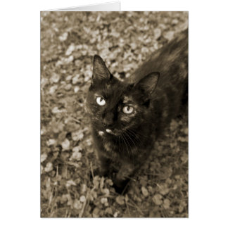 Tortie Cat Cards