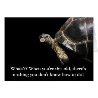 Tortoise Bubble Card