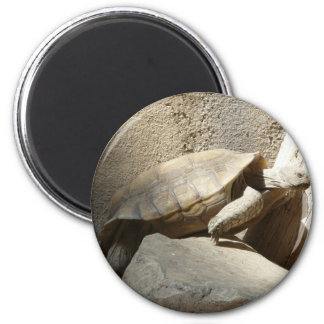 tortoise climbing 6 cm round magnet
