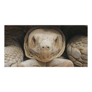 Tortoise Customised Photo Card