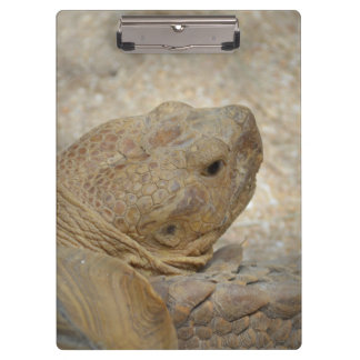 tortoise head close up old turtle clipboard